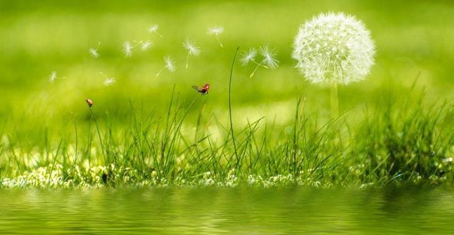 Programma LIFE: ecco i progetti vincitori del bando a favore di ambiente, natura e clima